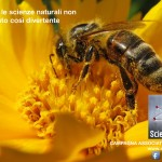 Scientificast Bee AA2013