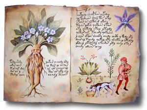 Rappresentazione delle radici di Mandragola da Tacuinum Sanitatis