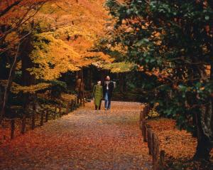 Momijigari autunno