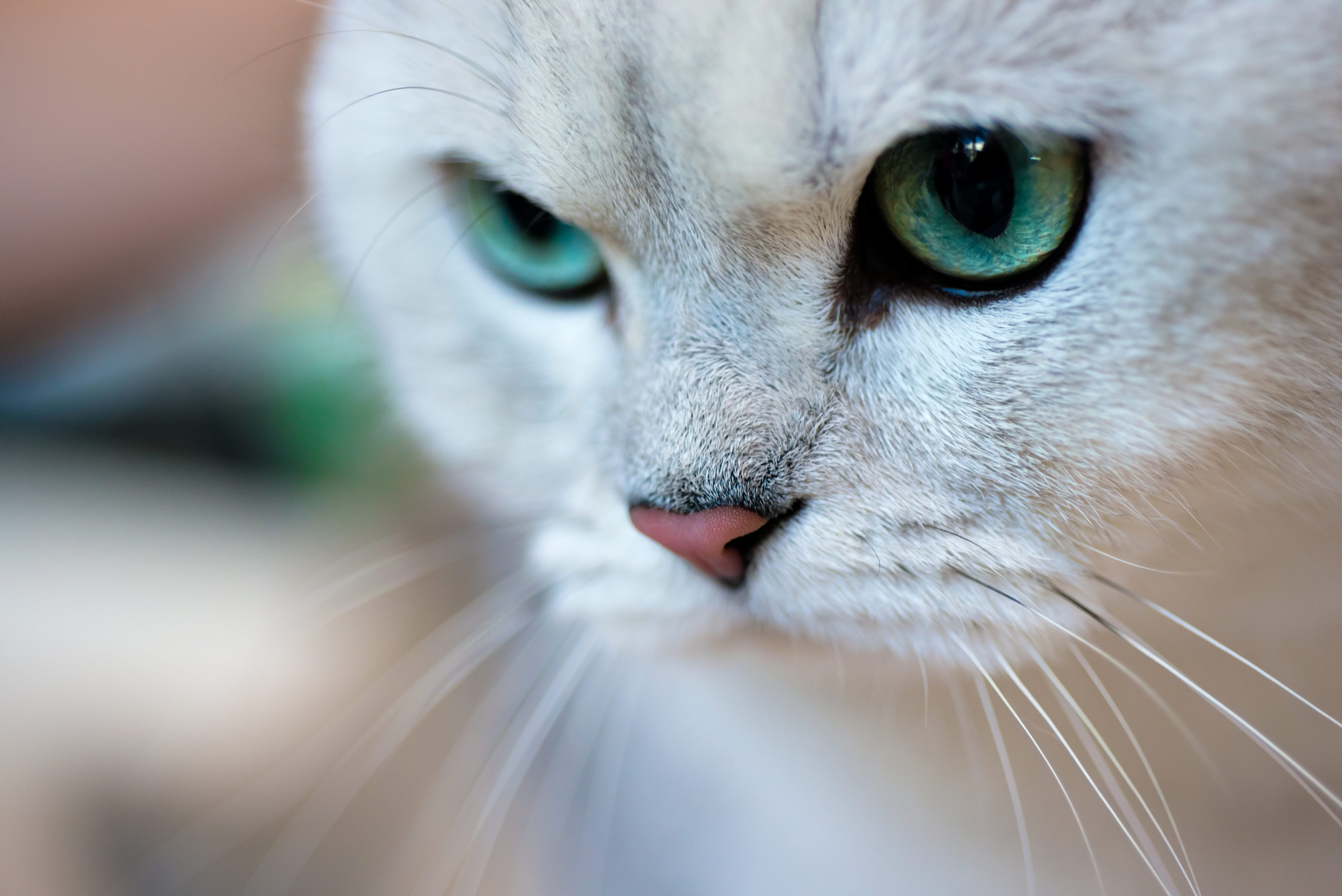 Gattini sterilizzati con occhi di smeraldo – Scientificast #127