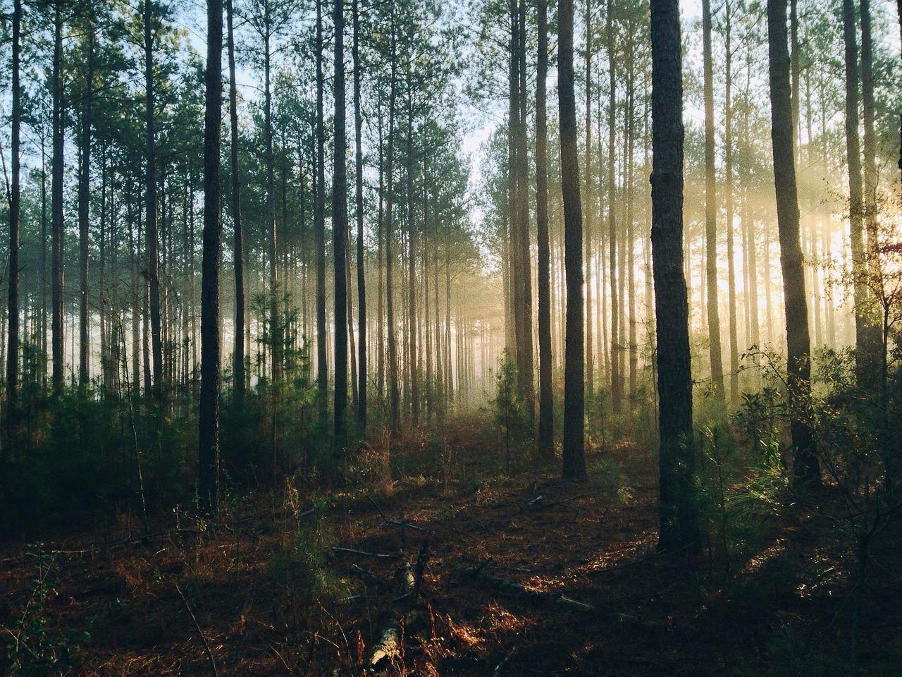 Quanti alberi ci sono sulla terra scientificast for Quanti senatori ci sono