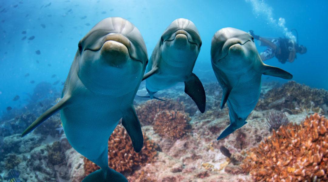 Delfini su Marte
