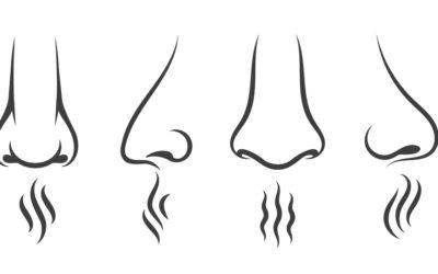 Il naso elettronico
