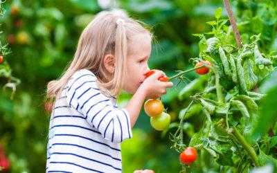 Odore di Pomodori al solstizio d'Estate