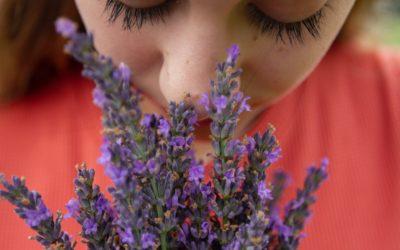 I 5 sensi: L'olfatto